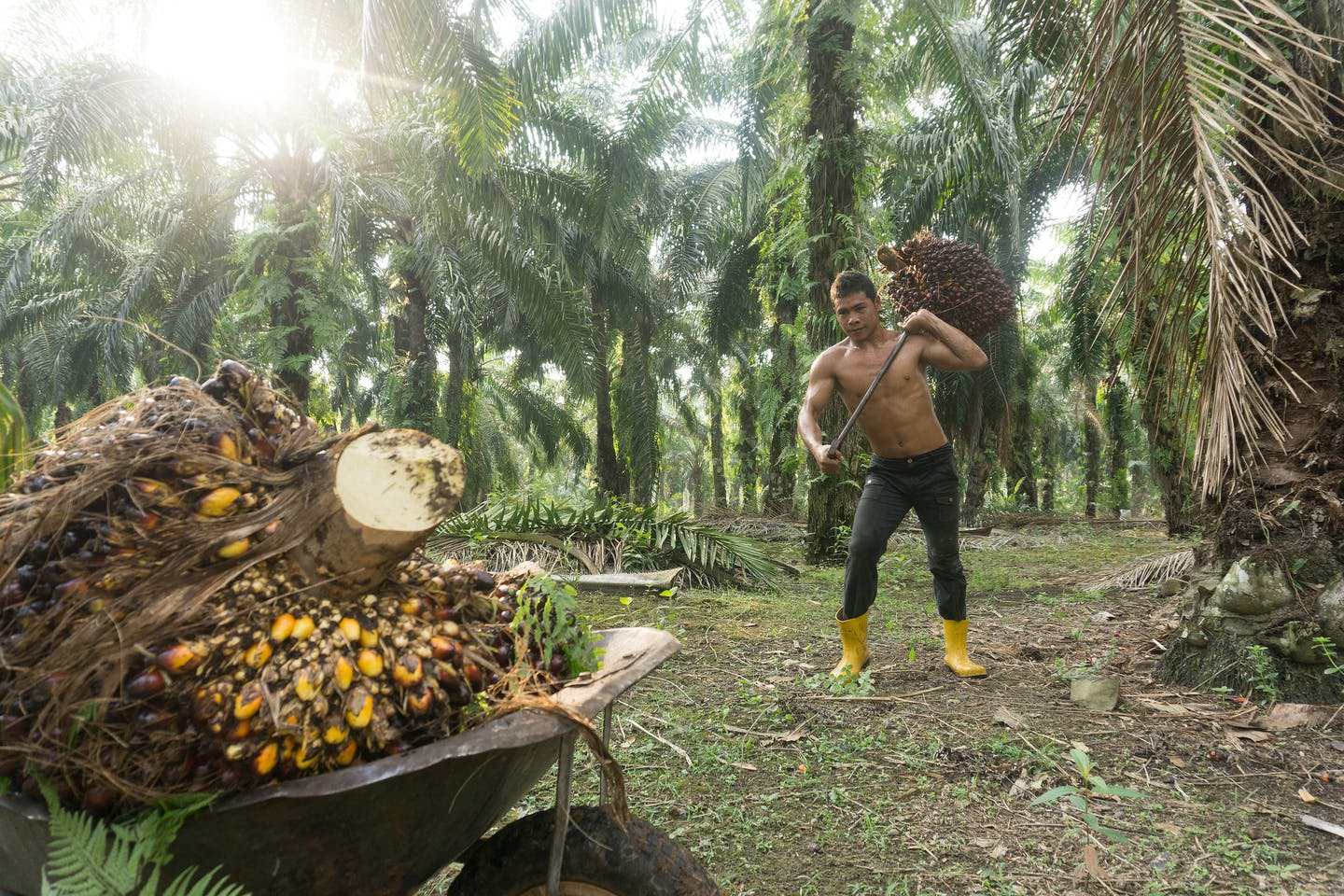 Palm oil worker, Malaysia