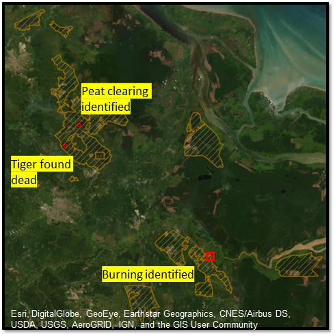 Greenpeace analysis shows three breaches of APP's commitments within PT Arara Abadi's concession area.