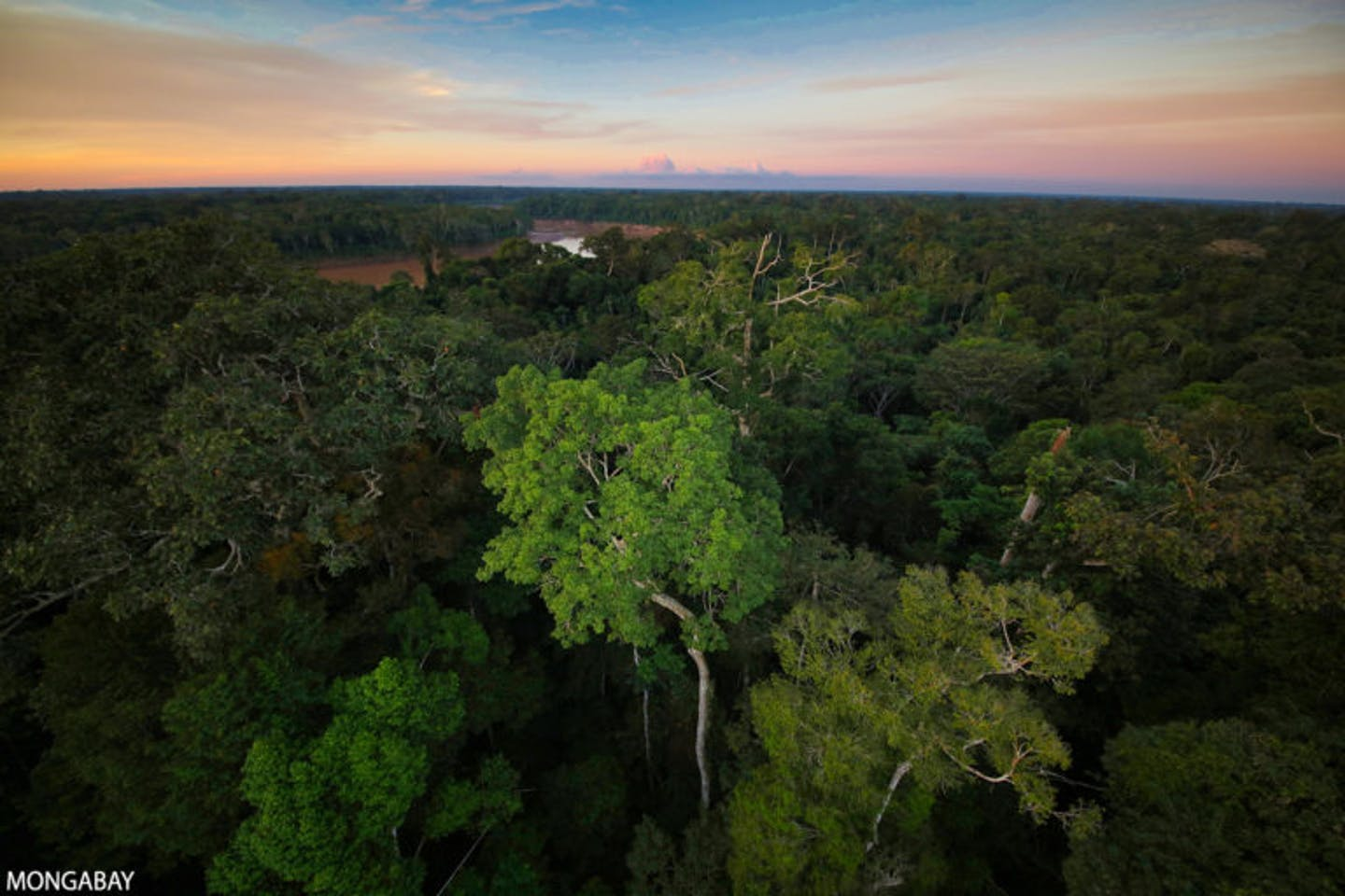 Mongabay Founder Rhett A. Butler: 11 things to watch in 2021