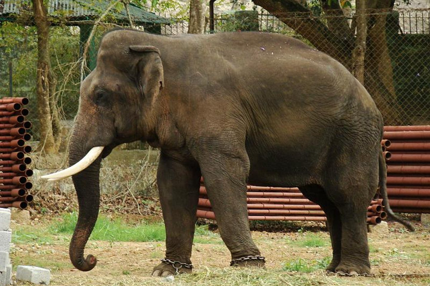 protect elephant reserves in india
