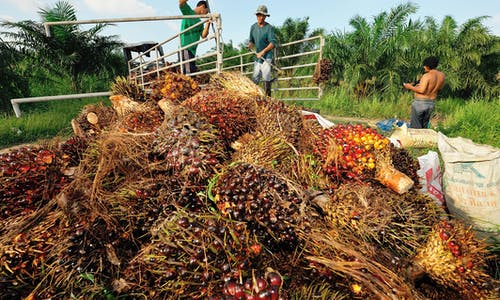 Can power from palm oil waste replace fossil fuels in coal-loving Asia?