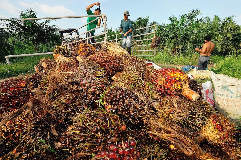 Palm kernel shells, Thailand