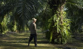 Do smallholders hold the key to sustainable palm oil?