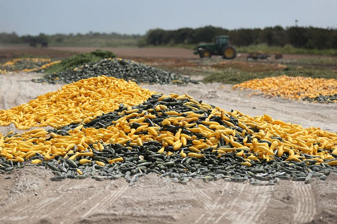 A pile of zucchini and squash is seen April 1 after it was discarded by a farmer in Florida City, Fla. |