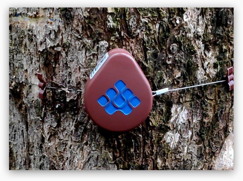 dendrometer on tree