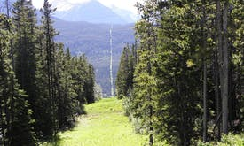 Planning and planting future forests with climate change in mind