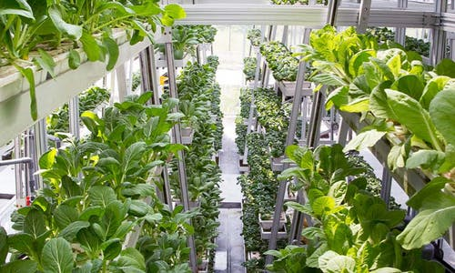 Vertical farms are overserved: Global food resilience needs a rebalancing act