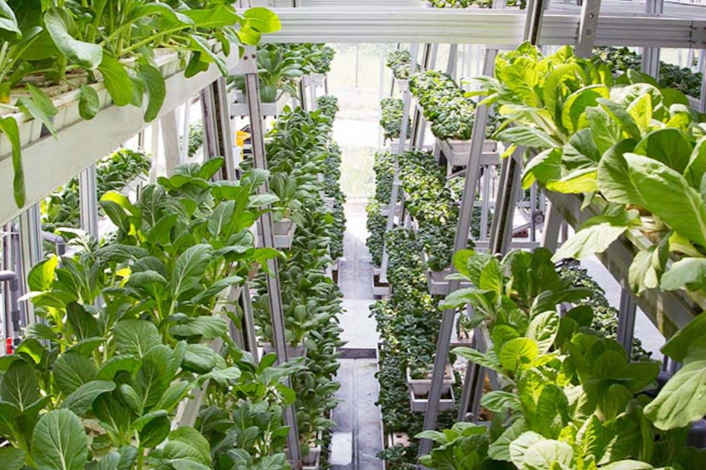 A vertical farm