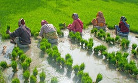 Usage of wastewater and sustainable agriculture can ensure water security in India