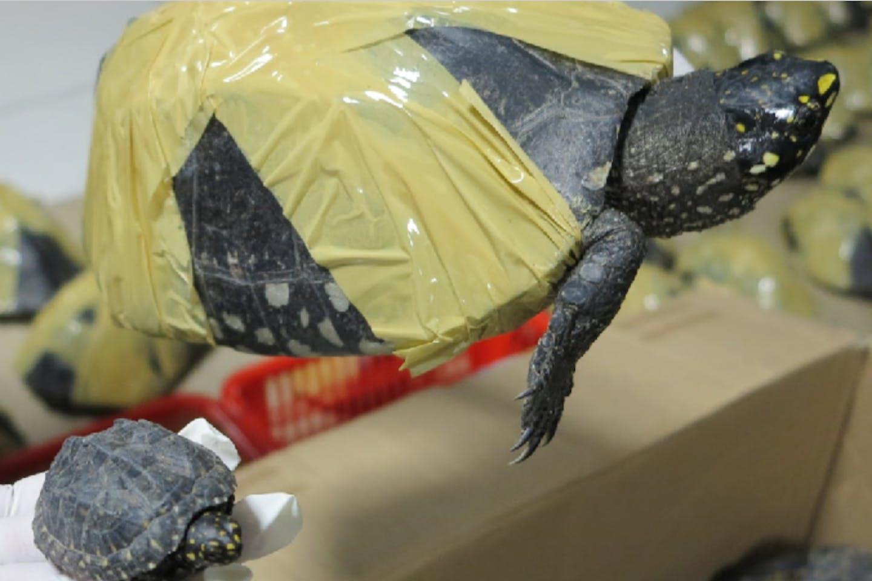 wildlife trafficking in chinese economic zones
