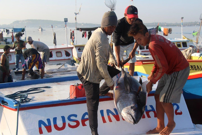 Indonesia tuna fisheries certification