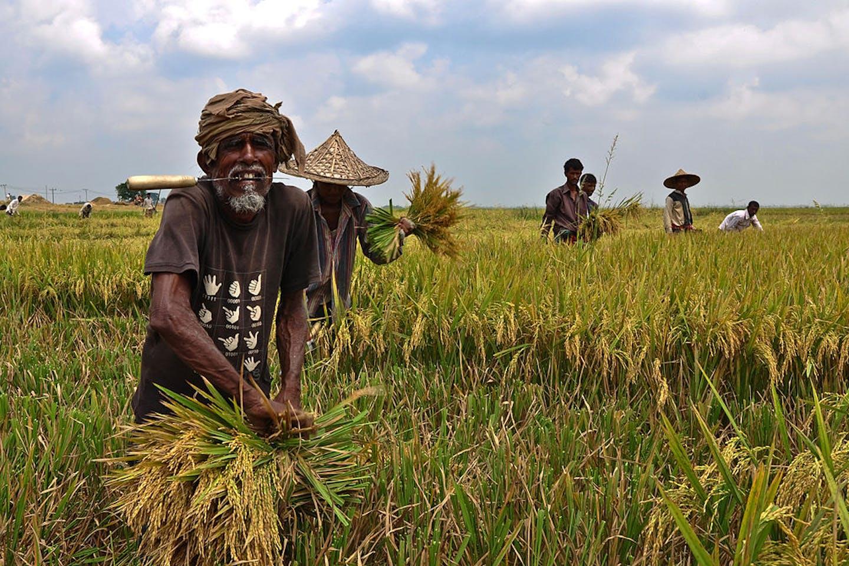 bangladesh farmers