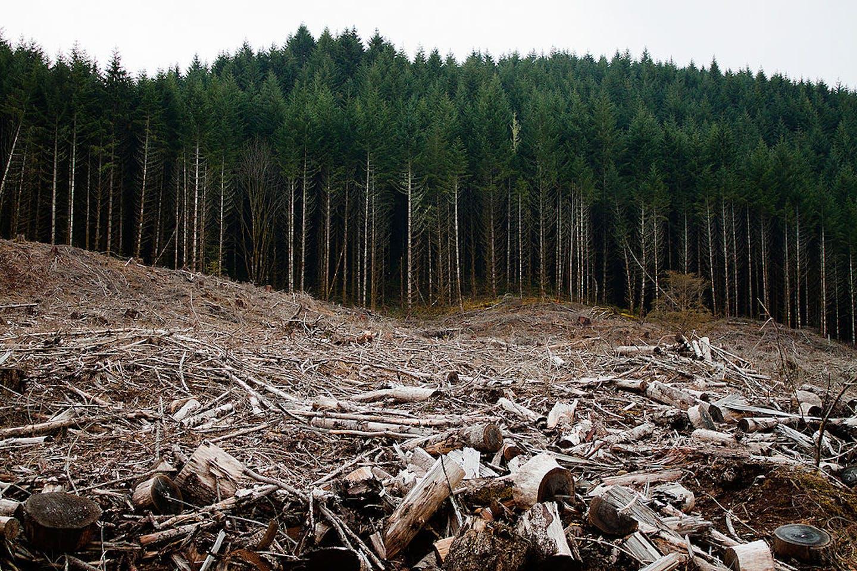 deforestation in oregon