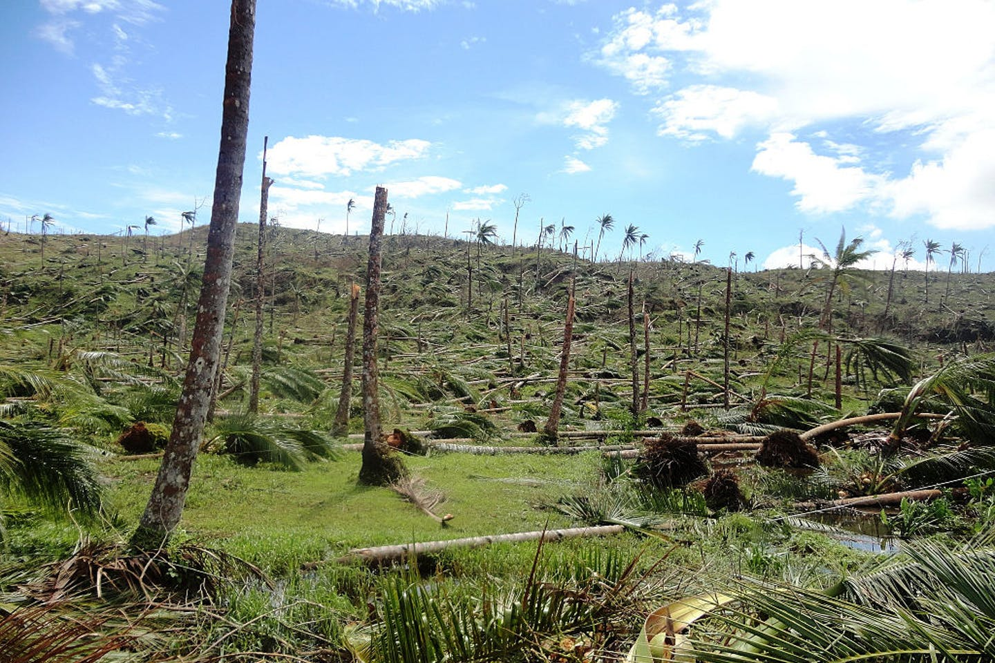 deforestation in davao