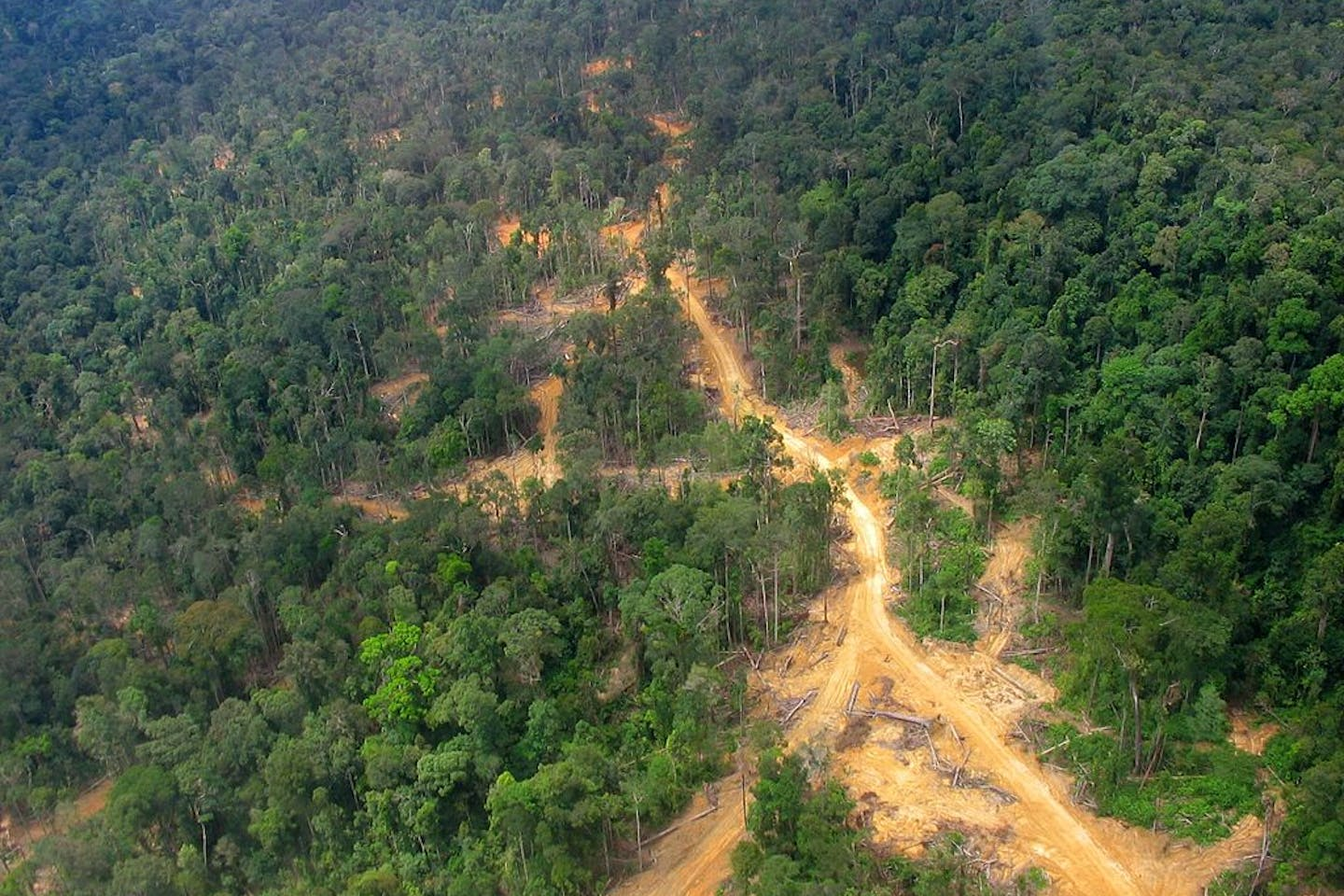 east kalimatan deforestation