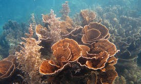 Coral reef monitoring takes to the skies