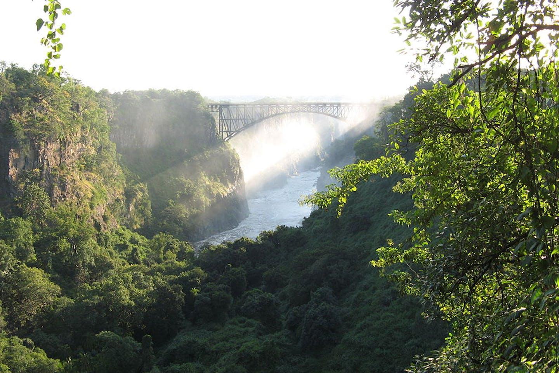 zimbabwe forests