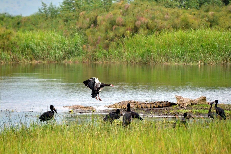 ecosystem lake