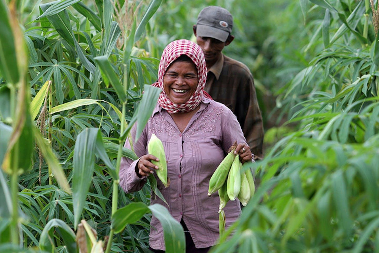 Cambodian corn farmers