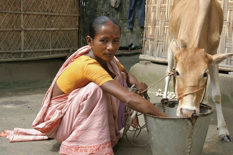 microfinance bangladesh suva rani