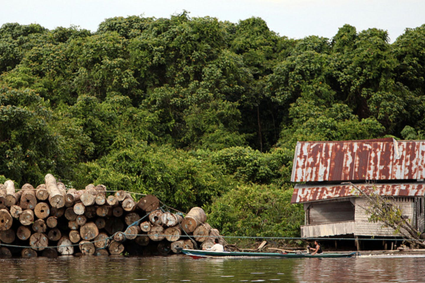 illegal logs in Central Kalimantan