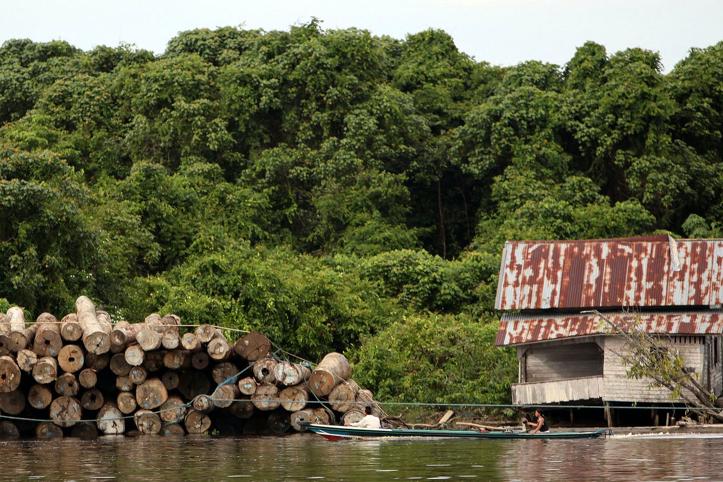 Local villagers float past a pile of illegally logged trees in Central Kalimantan, Indonesia