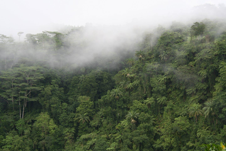 rainforest in Samoa