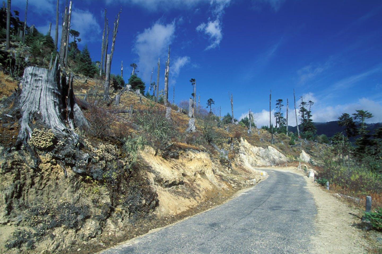 deforestation bhutan3