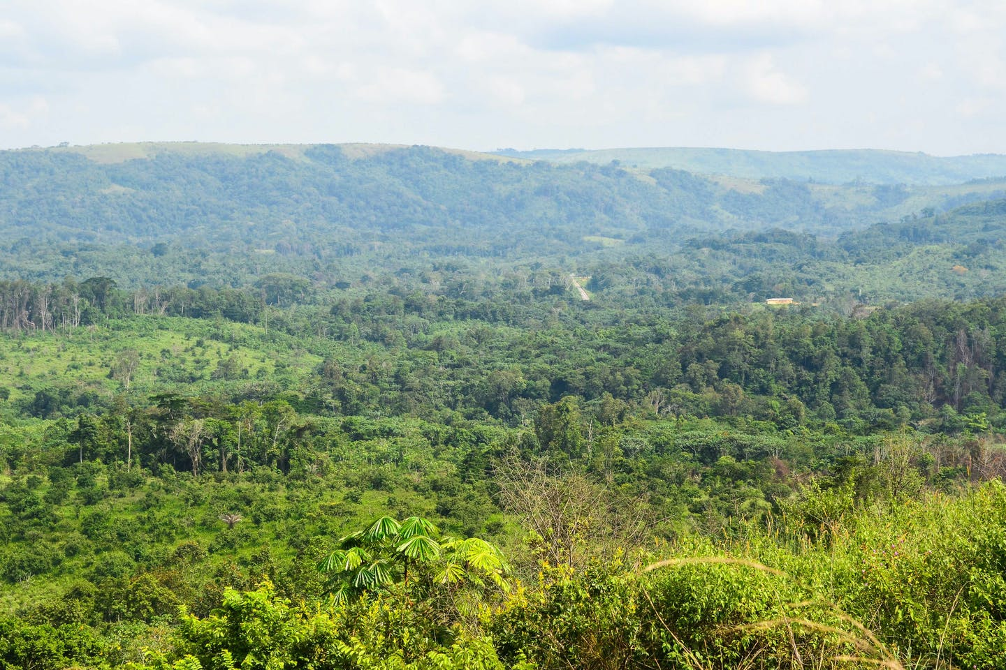 gabon forests