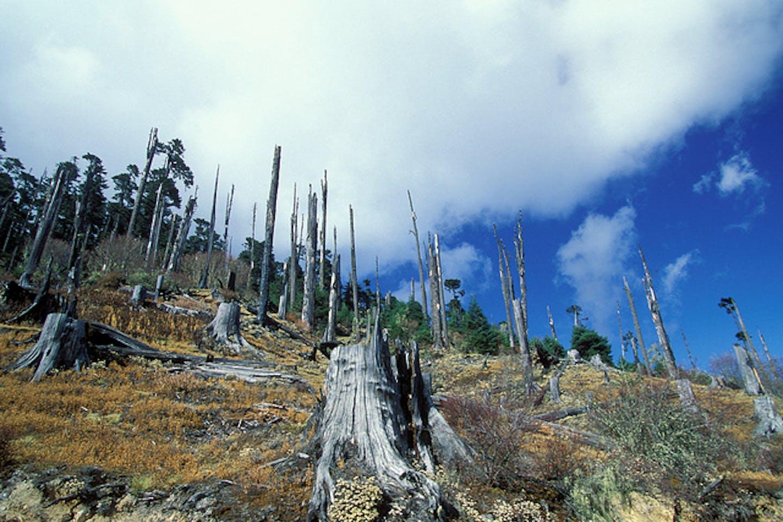 deforestation in Bhutan