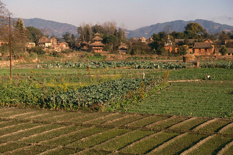 cultivation in Kathmandu Valley