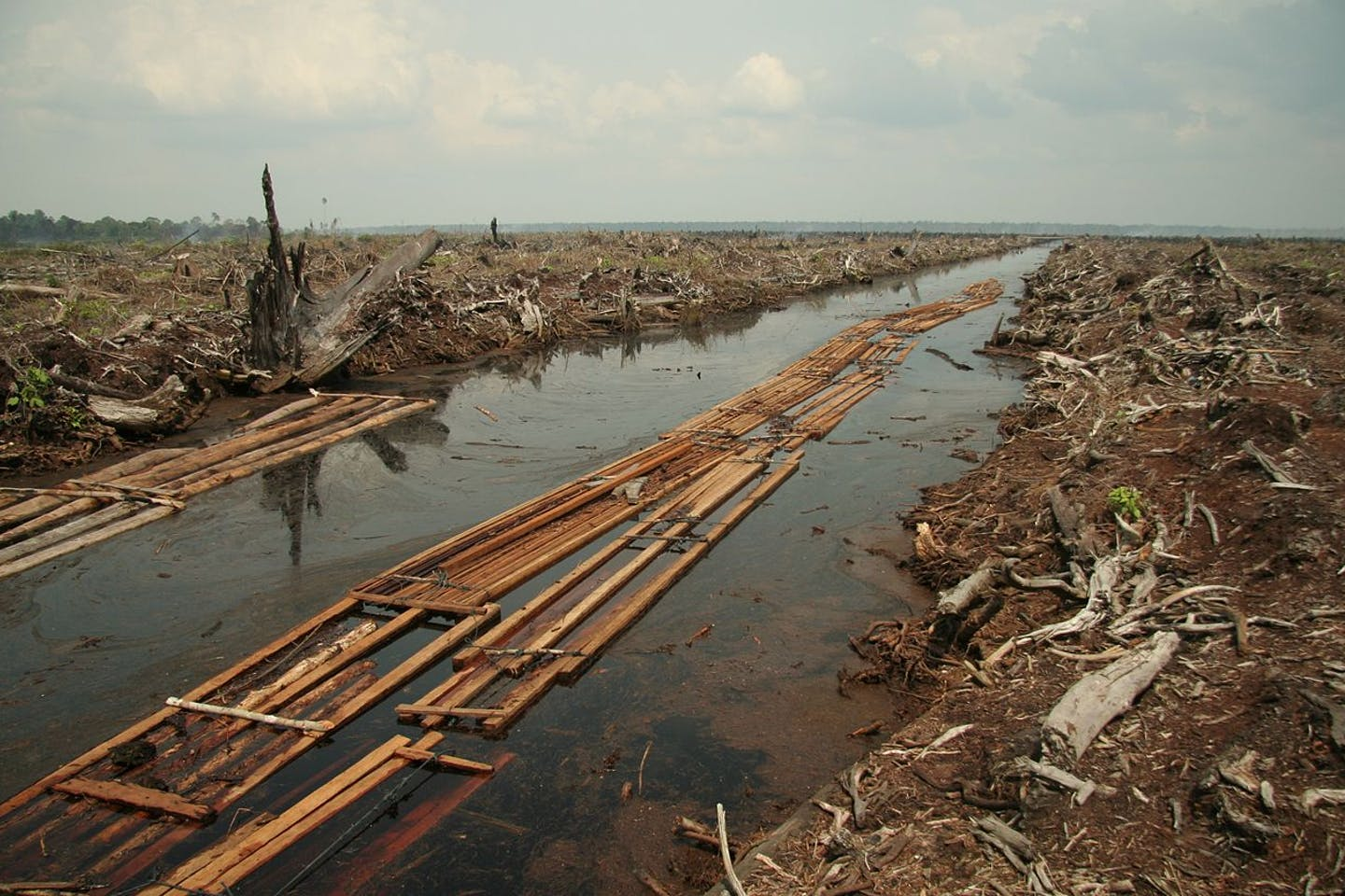 cleared forests for palm oil plantation