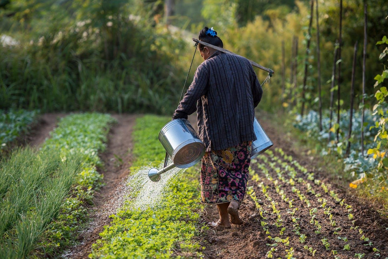 laos lady farmer