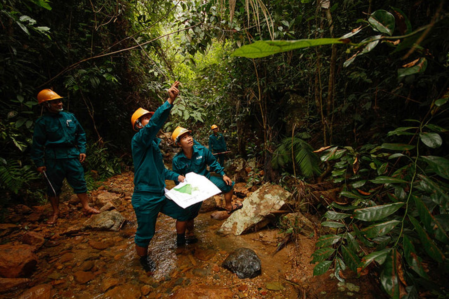 Vietnam forest protection