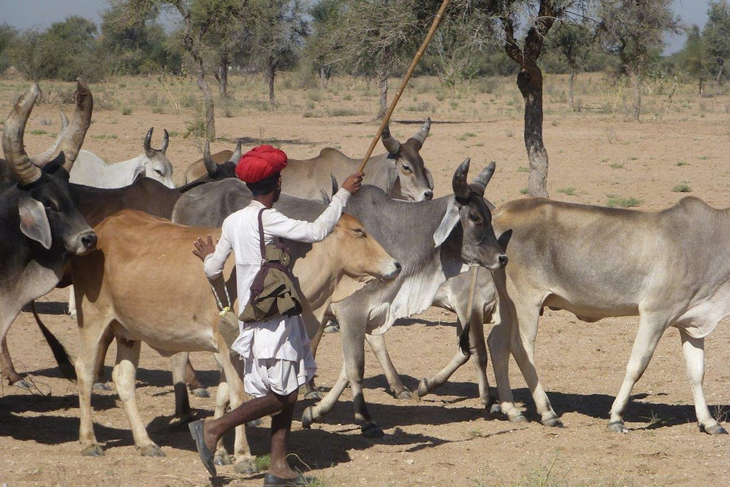 Adapting migratory pastoralists to climate change in Rajasthan, India