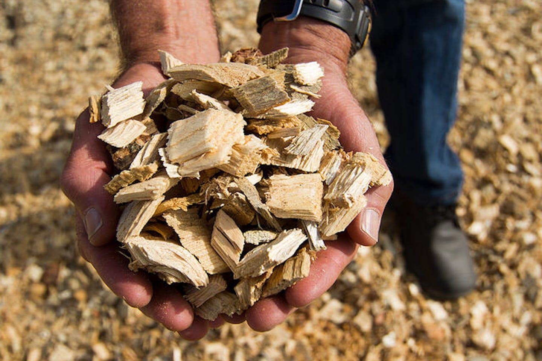 a handful of biomass