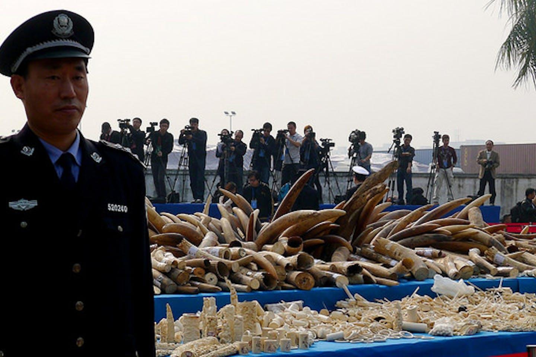 China ivory crush