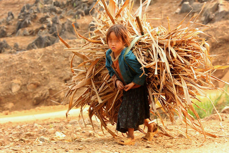 child labourer in a farm