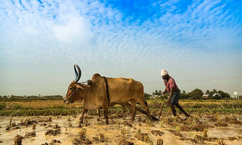 5 ways India must help its farmers face the threat of climate change