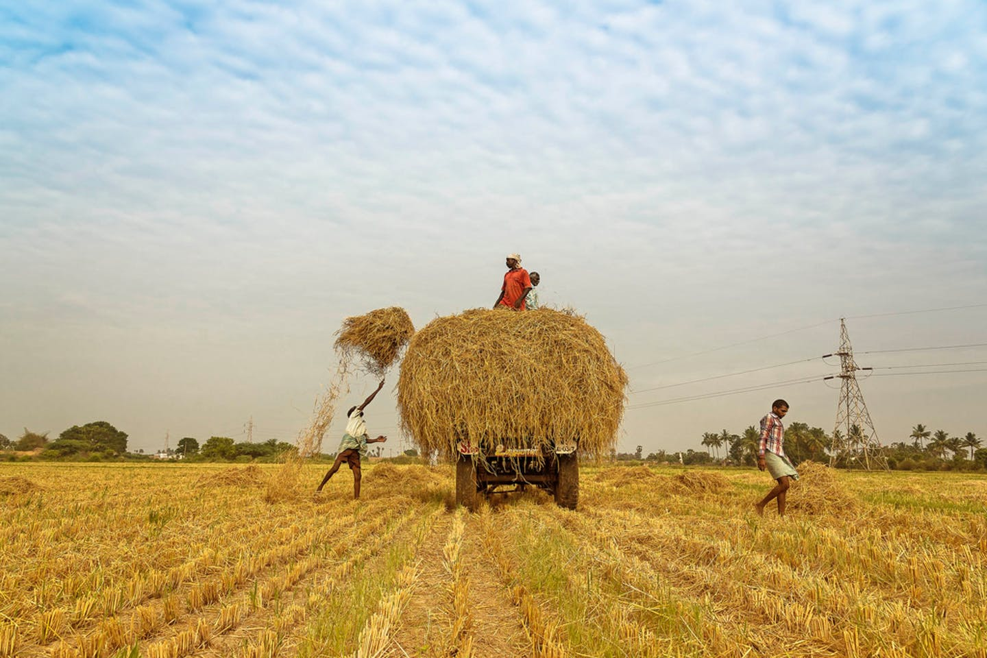 indian farmers2