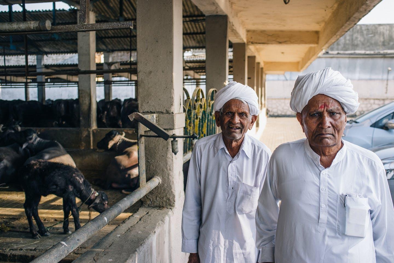 Mumbai dairy farm