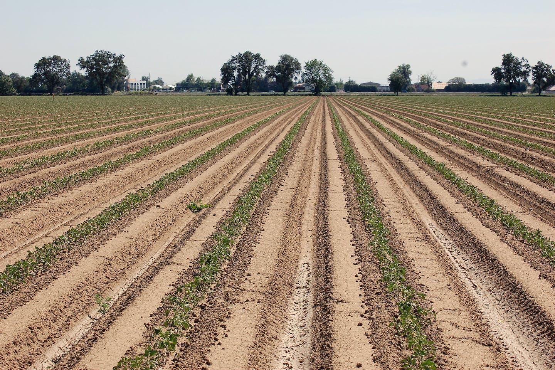 california micro irrigation