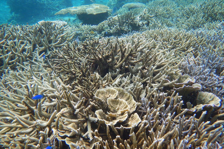 coral reefs japan