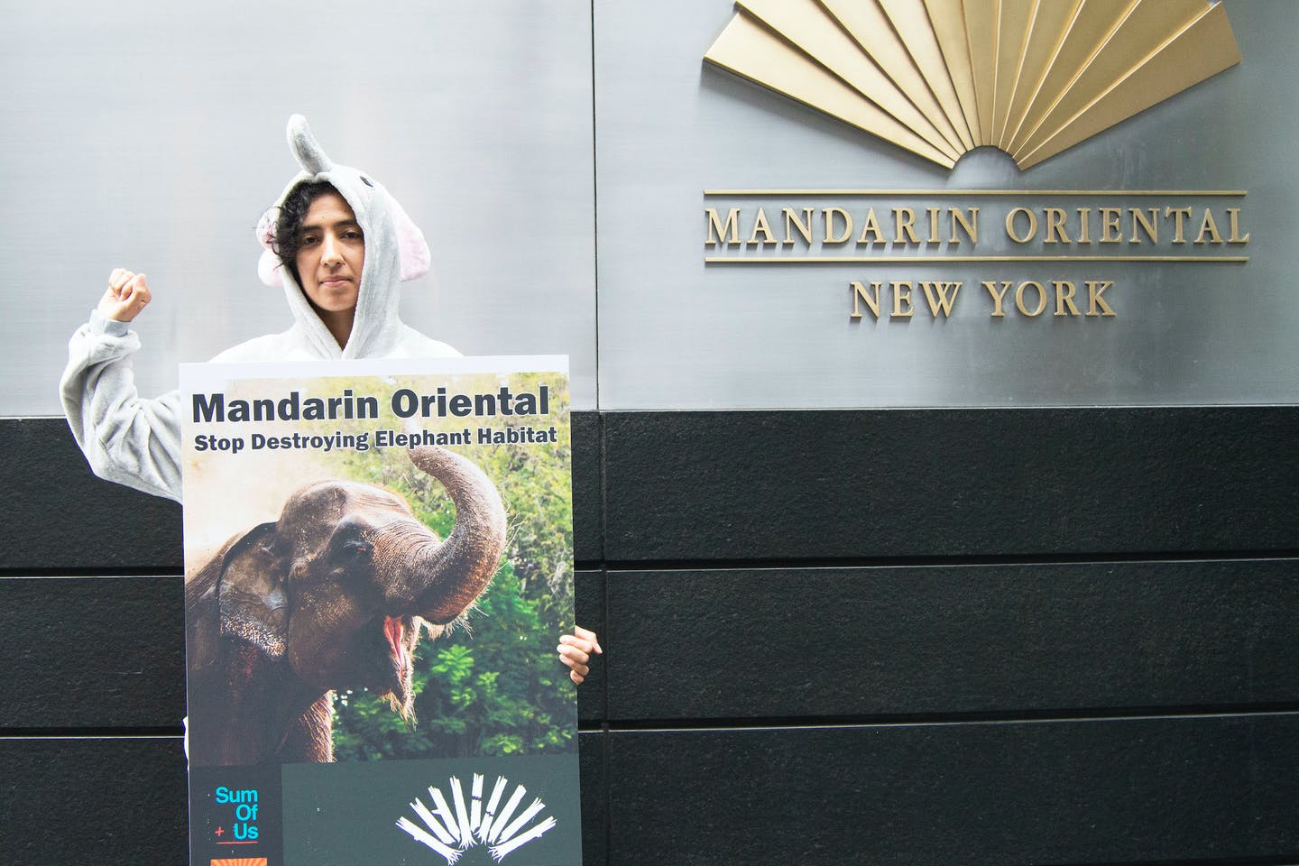 forest heroes elephant activist
