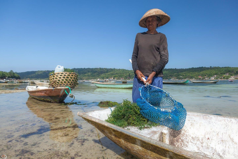 seaweed farmer in Bali