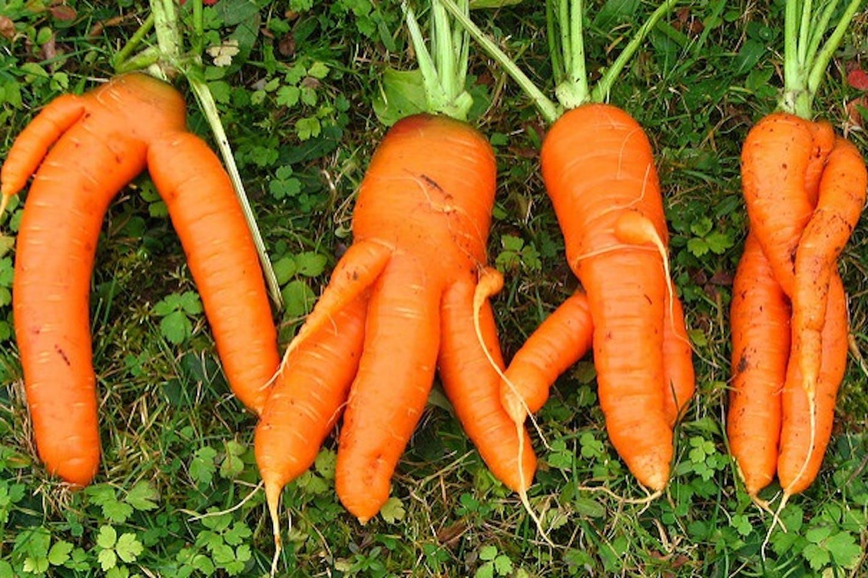 odd carrots