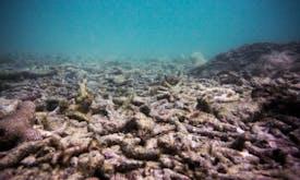 Conservationists clash over coral restoration