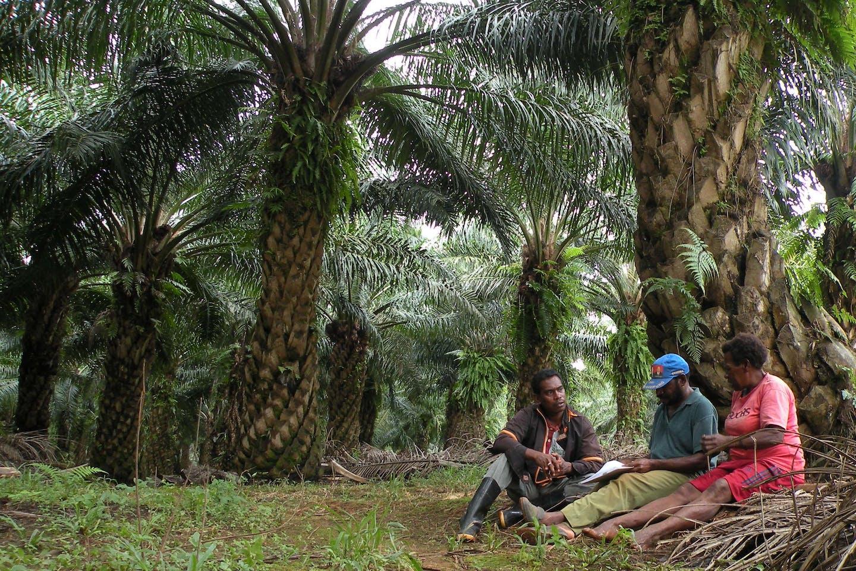 palm oil plantation workers take a break