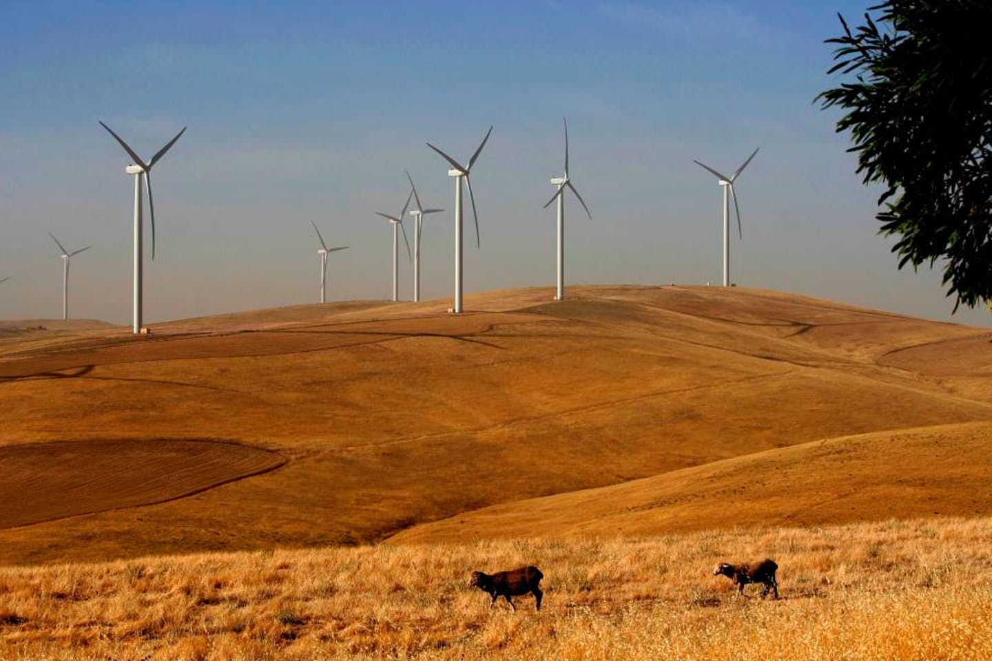 Snowtown Wind Farm in Southern Australia