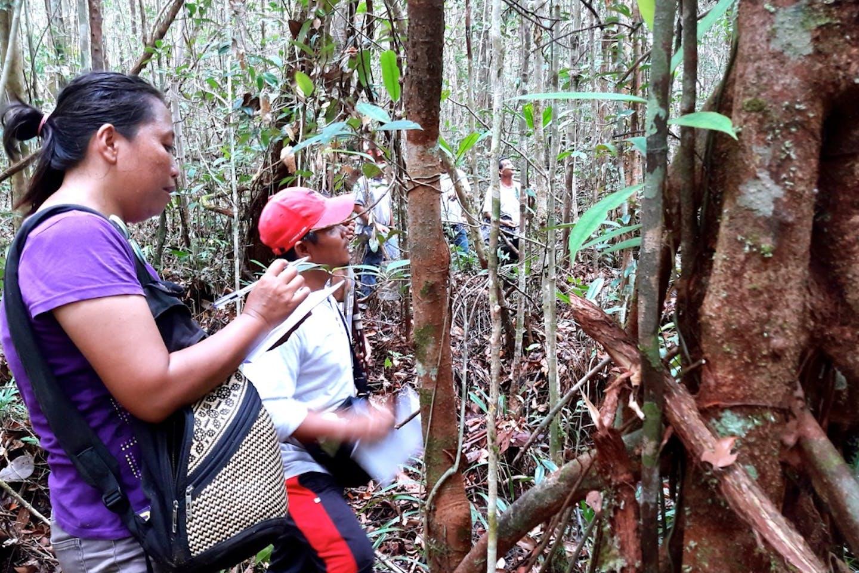 Bawan village forest